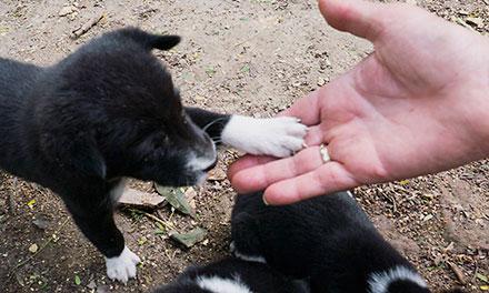Puppy handshake